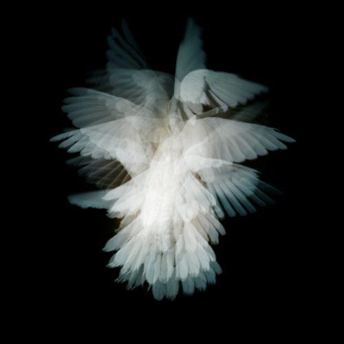 la-colombe