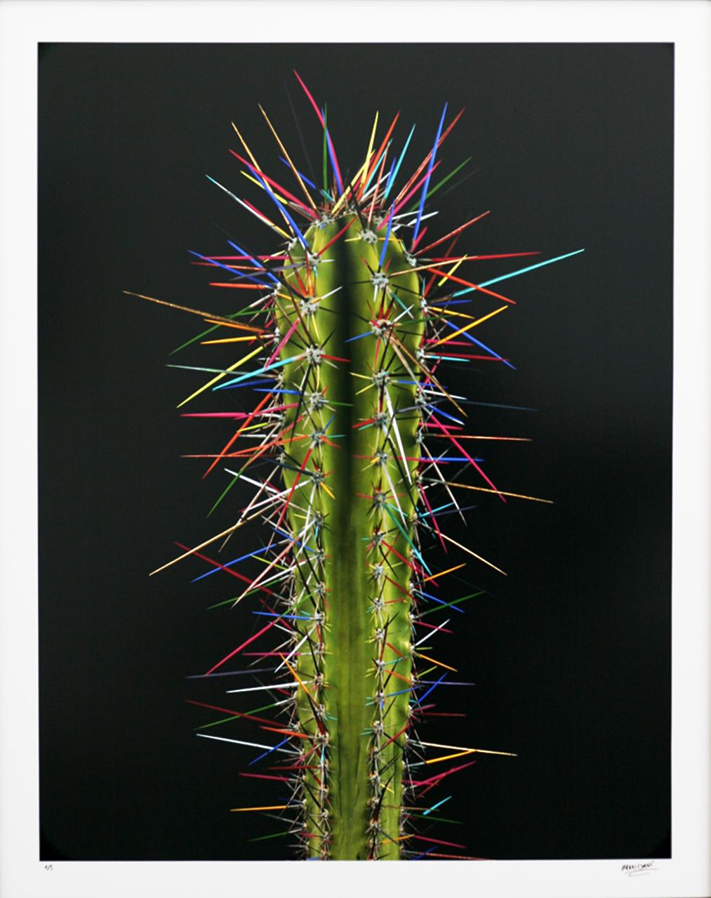 Cactus Topolino